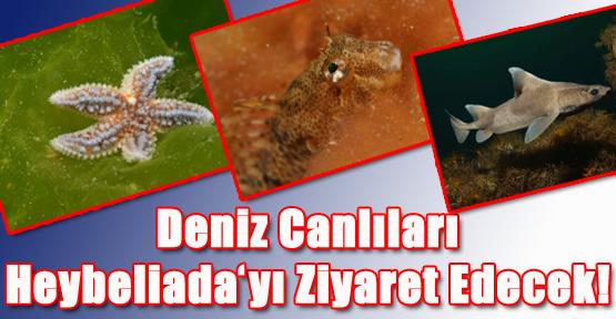 Deniz Canlıları Heybeliada'yı Ziyaret Edecek!