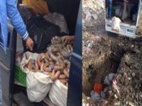 İstanbul'da kaçak et skandalı