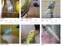 Papağan Beslemenin Yolları