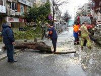 İstanbul'daki fırtına, Şişli Mecidiyeköy'de ağacı devirdi